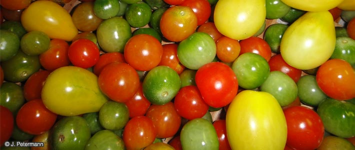Genetic diversity in tomatoes